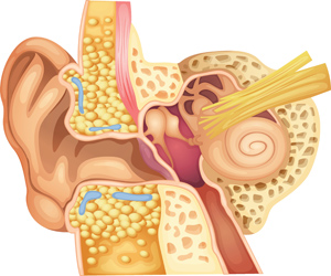 Øret illustrasjon